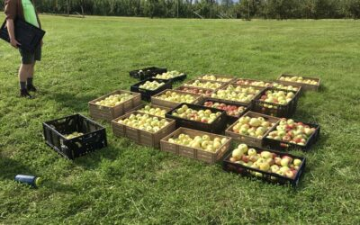 Get Back to the Orchard with us this Fall!